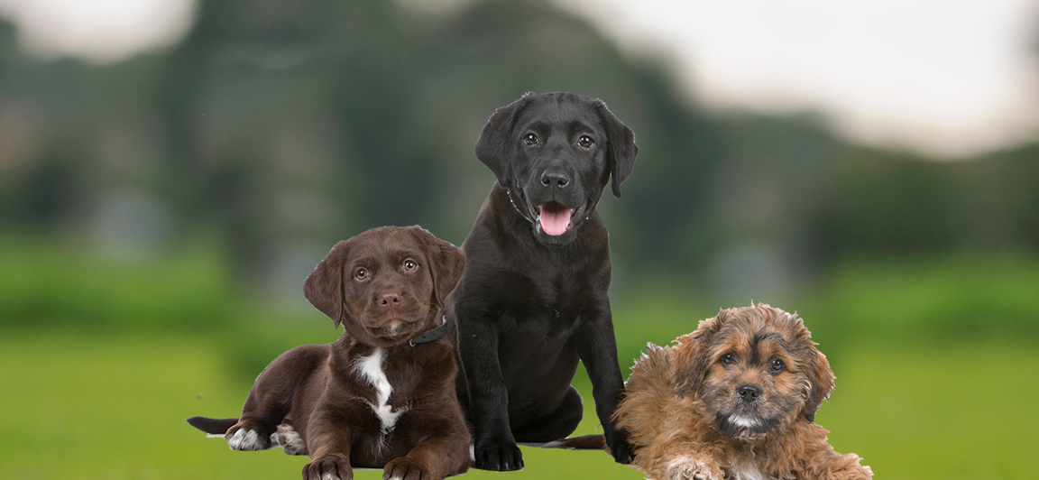 The Scottish Kennel Club is the leading canine authority in Scotland